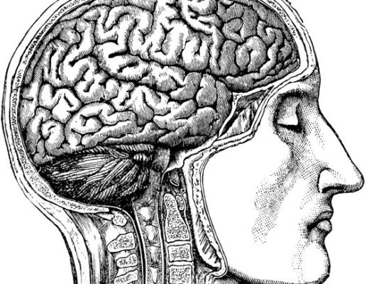 vintage brain anatomy image represents concussion