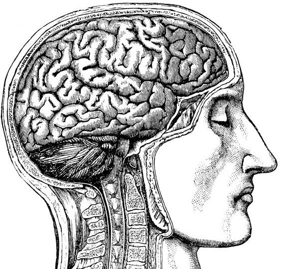 vintage brain anatomy image represents concussion